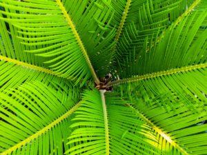 palm-200965_1920